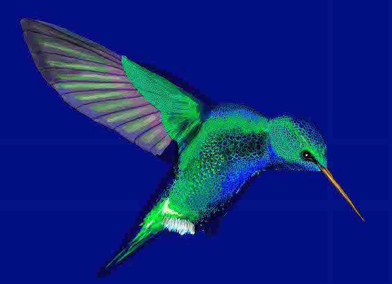 hummingbird (low res) by Robert Clear